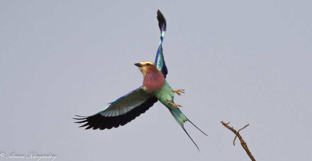 birdwatching Kruger