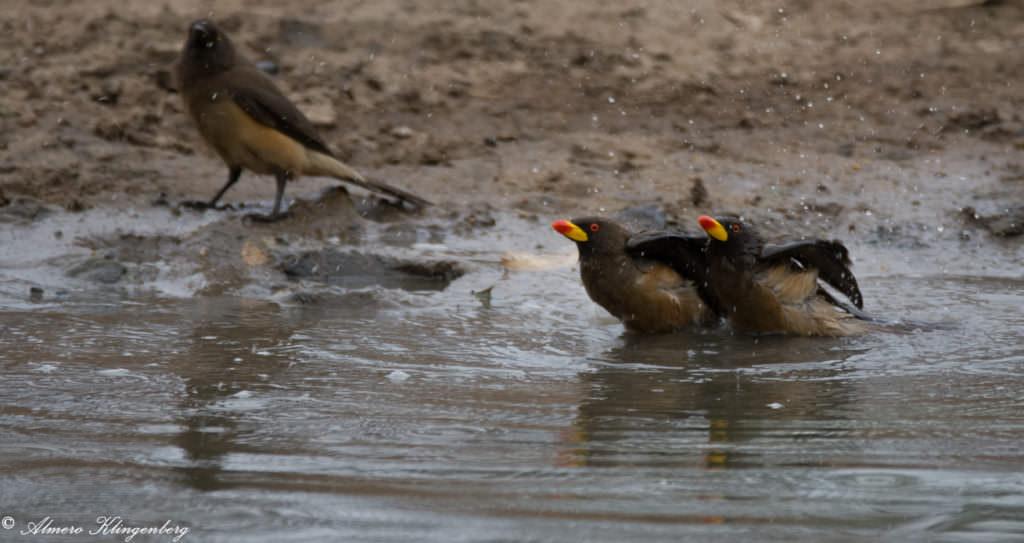 Timbavati birdwatching