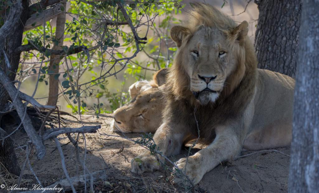 Big 5 Kruger