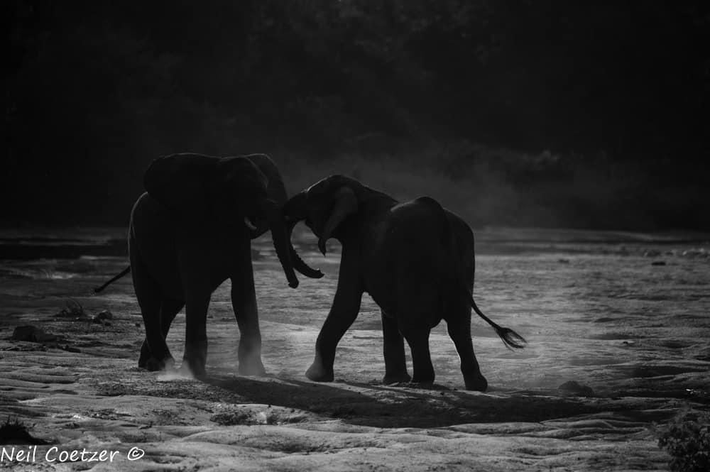 Timbavati Wildlife Photography