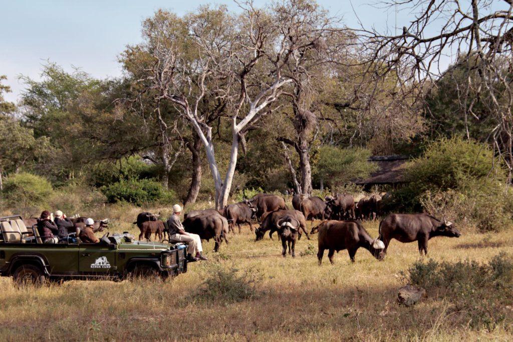 South Africa Family Safaris