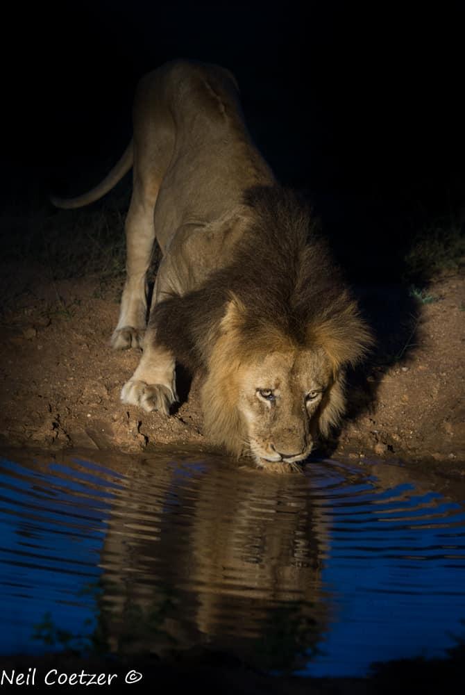 Kings Camp Wildlife