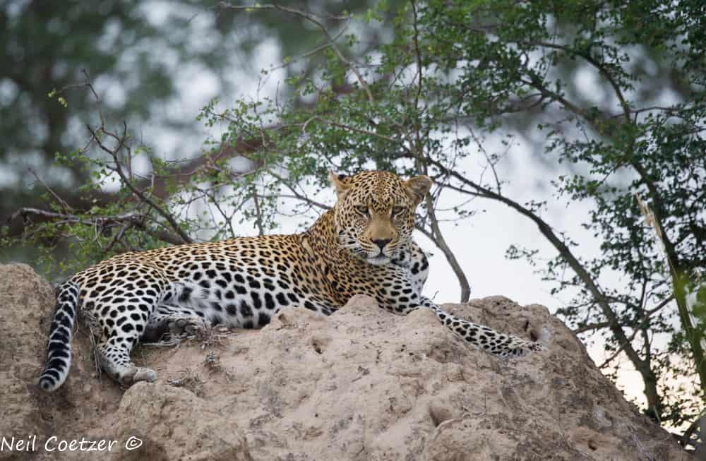 Wildlife Timbavati