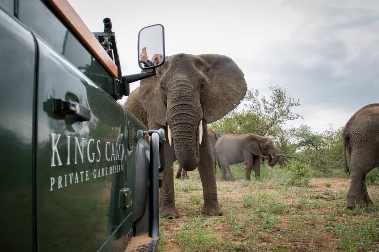 Kruger photographic safaris