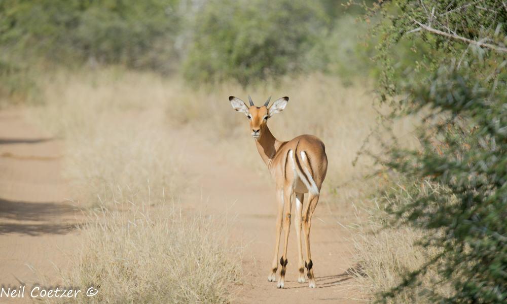Timbavati Wildlife
