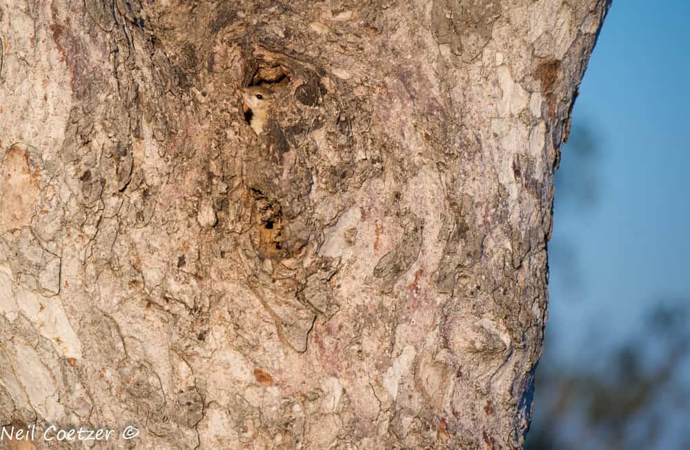 Kruger National Park Wildlife