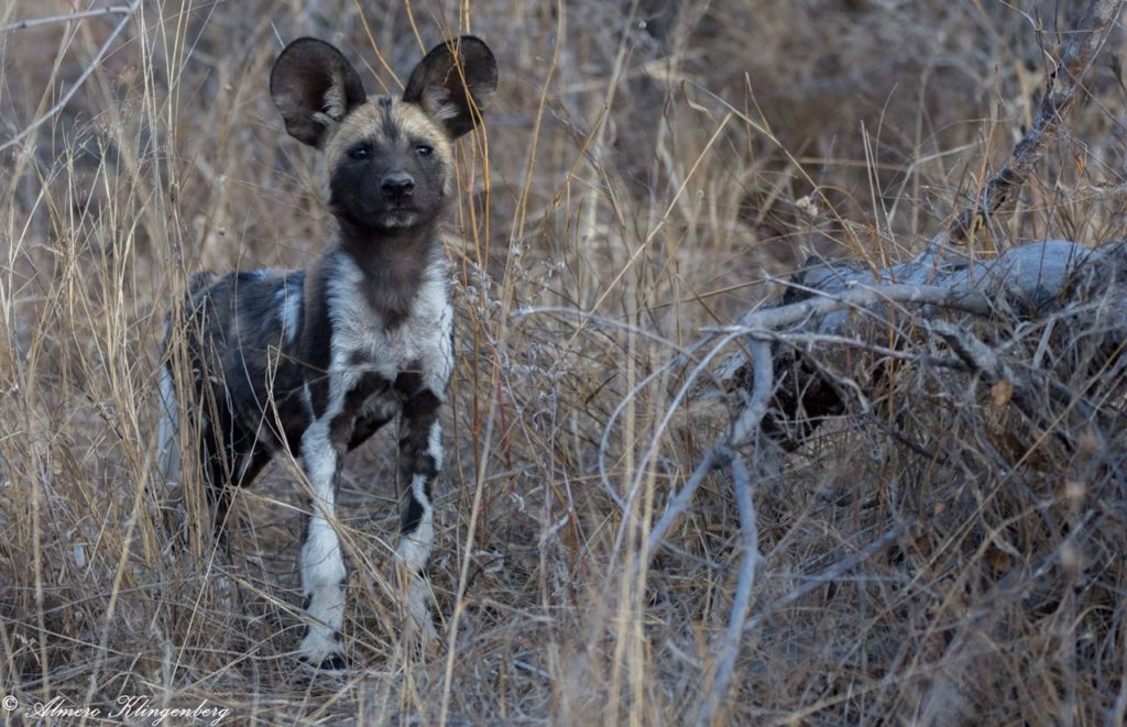 best place to see wild dogs