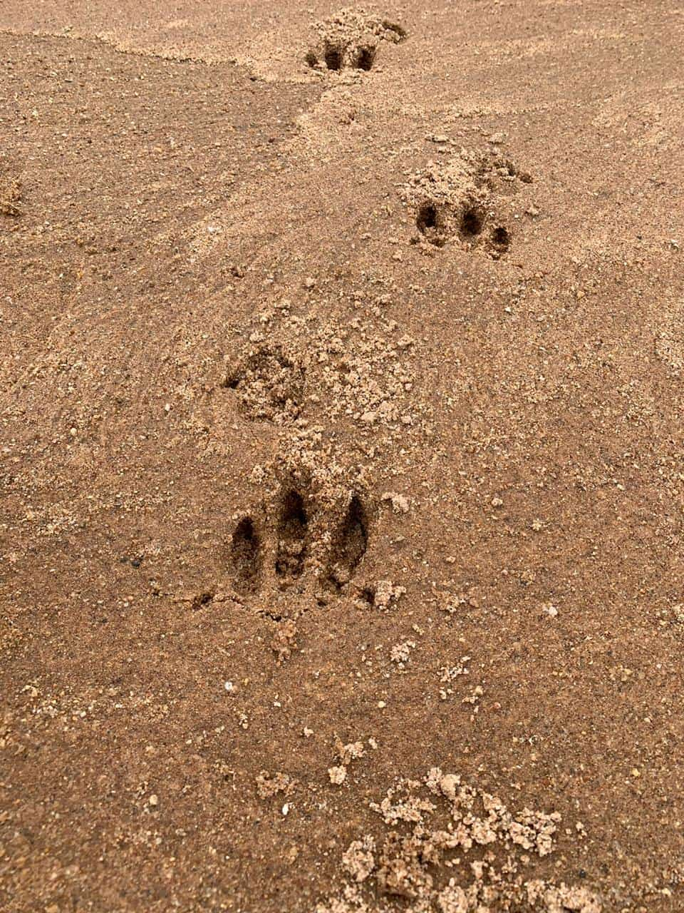 Animal Tracks Quiz   Test Your Knowledge   Kings Camp